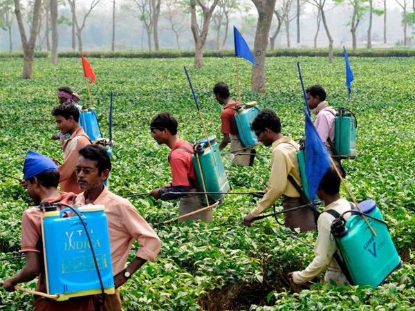 Government gives a brief account of measures taken by farmers for proper use of pesticides