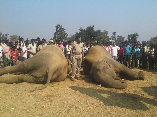 In an heinous act two elephants died of suspected electrocution in Odisha's reserve forest