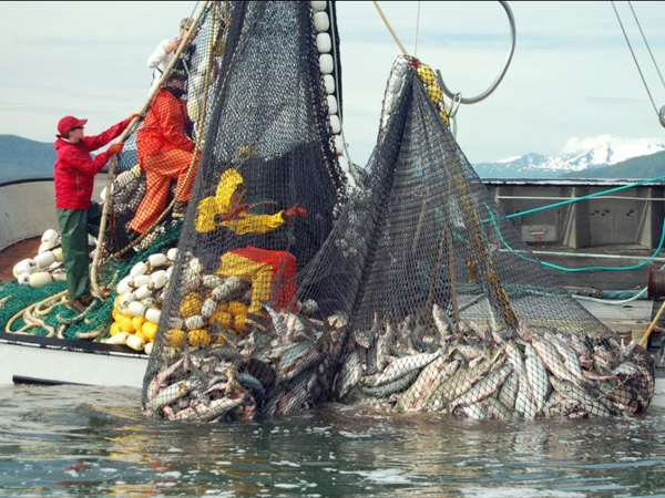 Govt initiates Rs.52000 lakh 'Blue Revolution' to boost fisheries sector in 20 states