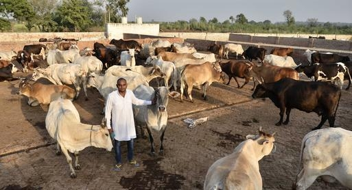 Shut down illegal slaughterhouses within 6 weeks: Patna HC