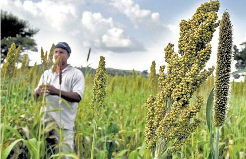 Kharif crop sown area rises by 12 lakh hectare despite rainfall deficit says Agriculture Ministry