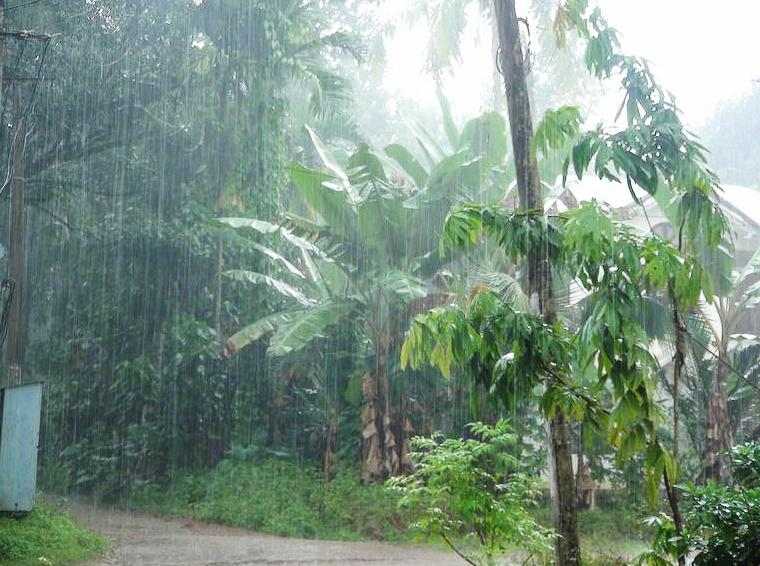 Good News! IMD forecasts normal monsoon this year at 96%