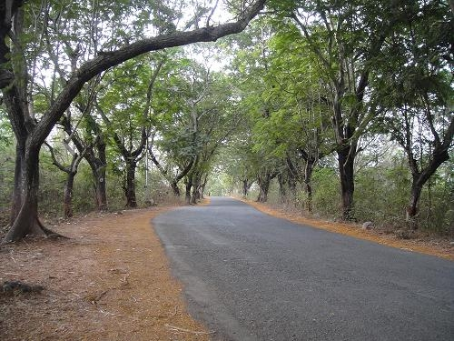 Aarey Milk colony declared as Eco-sensitive zone by National green Tribunal