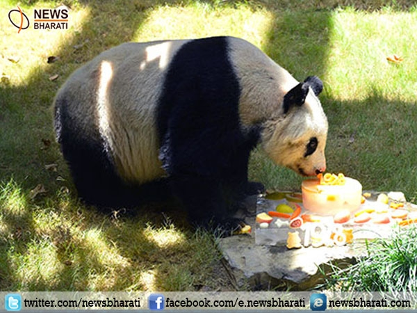 Oldest Living Panda 'Jia Jia' dies in Hong Kong