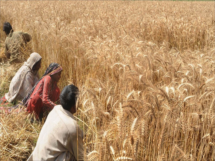 Farm, livestock experts from India, Pak focus on reforms to help farmers