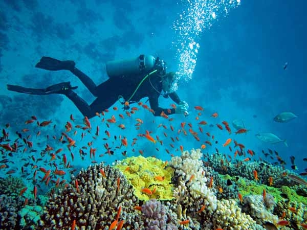National Institute of ocean technology develops 'PROVe' to map coral reefs in Andaman & Nicobar