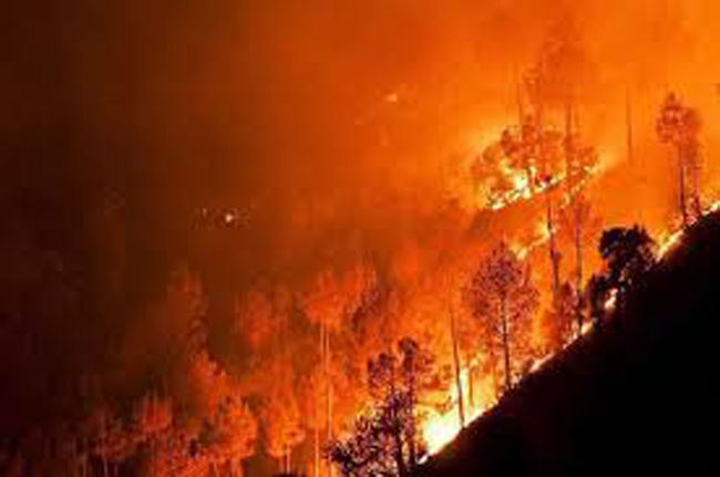 Wild fire destroys 1,400 hectares of Nepali forest