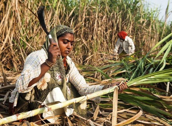 Cabinet decides to extend production subsidy to sugar mills to facilitate timely payment of farmers