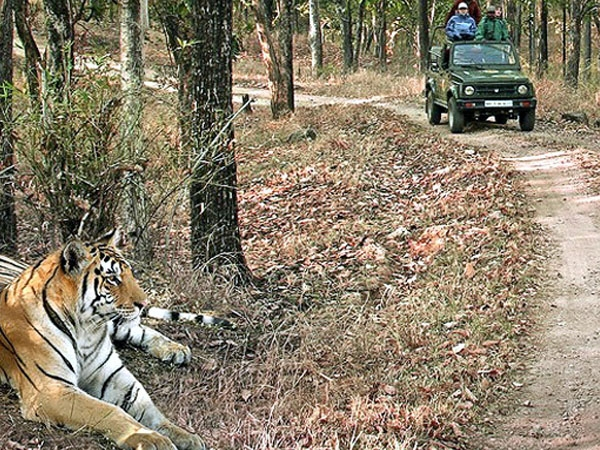 NTCA asks to halt mushrooming of resorts and fences in Pench Tiger Reserve