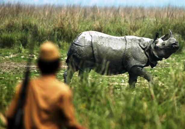 Assam to compile entire database of Rhino horns kept at the State treasuries