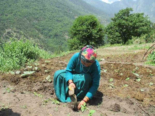 Dabur joins hand with DRDO to educate farmers for cultivation of medicinal plants in Ladakh