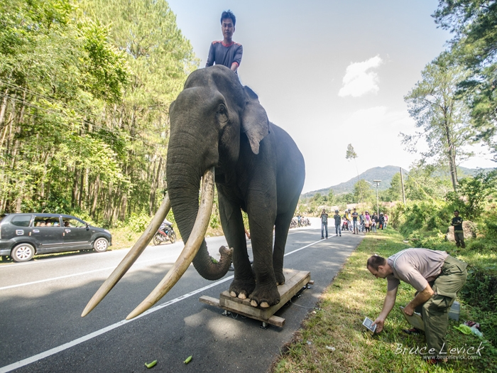 Call to save Sumatra pachyderms from getting extinct