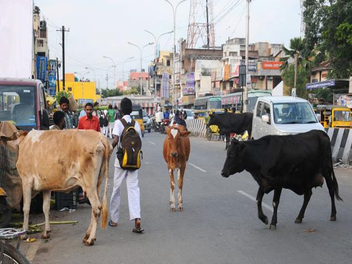 Cops harp on putting glow strips on cattle horns to avoid accidents