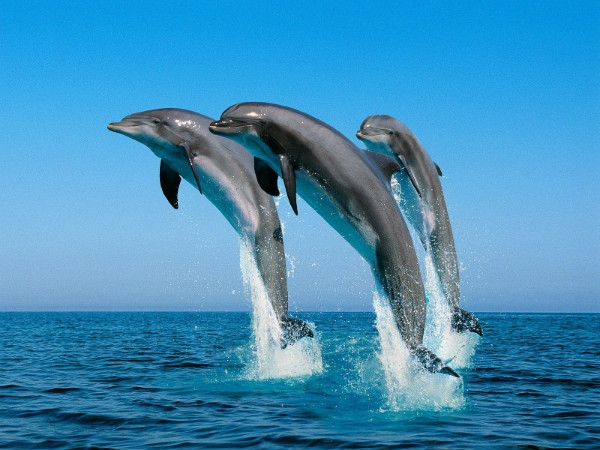 Government initiates various steps for conservation of national aquatic animal 'Dolphin'