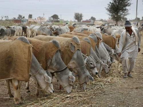 Rs. 100 crores allotted in 16 states and 1 union territory for FMD control programme