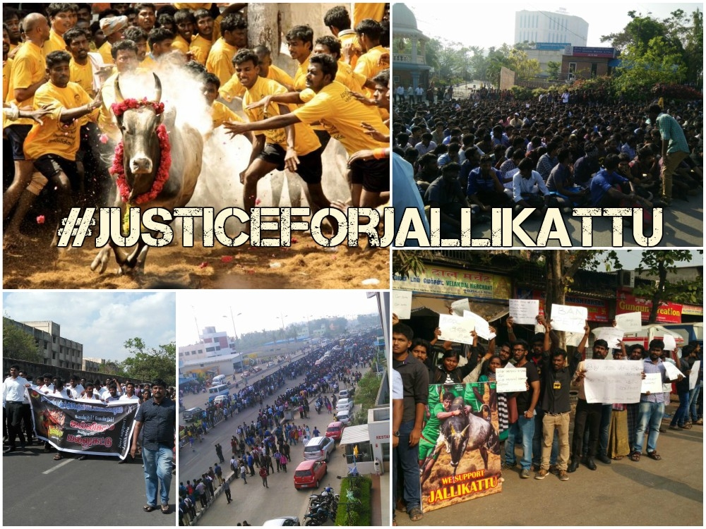 #JusticeforJallikattu fever engulfs Tamil Nadu, thousands camped at Marina Beach