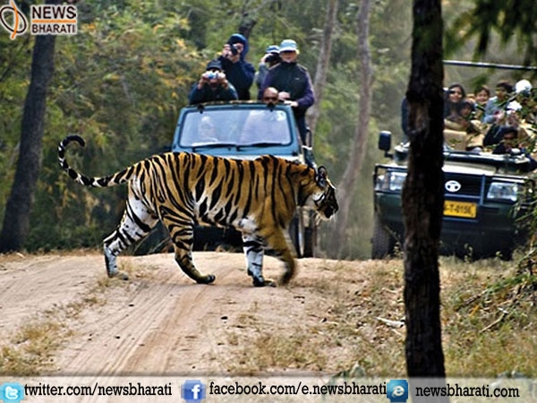 "Tourists to experience 2017 as ""Year of the Wild"" in Karnataka"