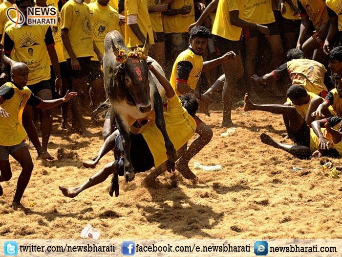 #Jallikattu conducted in several parts of Tamil Nadu; protests still on for 'permanent solution'
