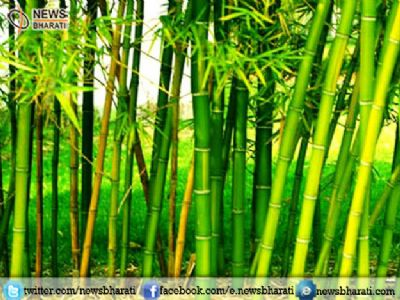 Achhe Din for Farmers: Govt will allow bamboos to be grown on Non Forest land