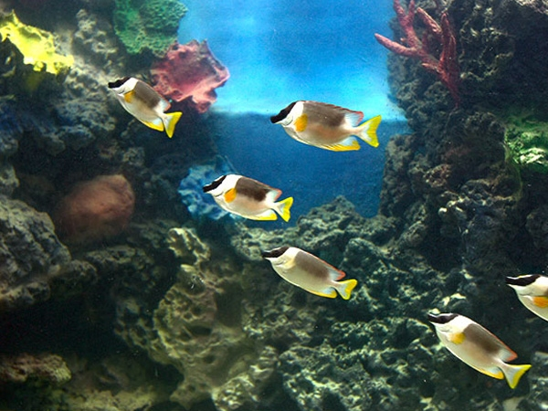 India's first centre of excellence for breeding ornamental fishes to setup in Rajasthan