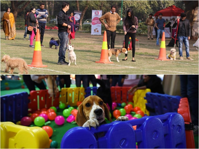 Now find best groomers and showcase the talents of your pets at India International Pet Trade Fair