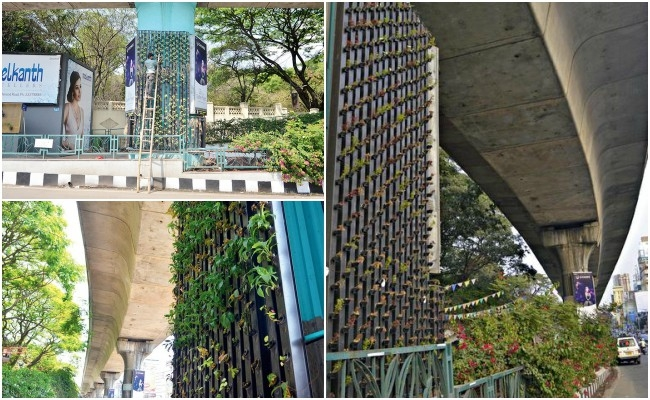 Bengaluru's metro pillars to be converted into vertical gardens using 'hydrophonics'