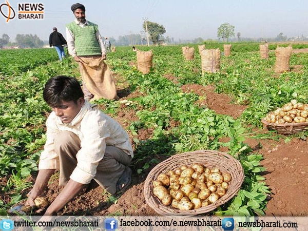 Now MP farmers can directly sell their produce to 'Adarsh Kisan Bazaar'