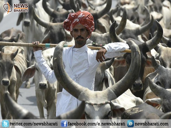Life imprisonment for cow butchers in Gujarat