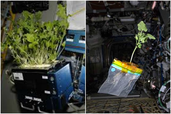 NASA to create small eco-system on ISS to grow food during deep-space exploration missions