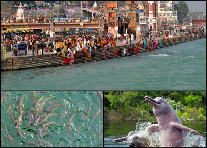 NMCG to survey the population of aquatic life and improve the quality of Ganga river water