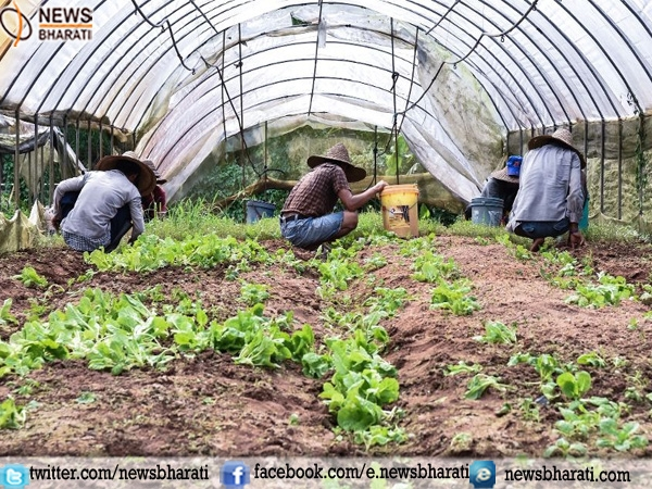 Singapore thriving to create an active eco-system to boost farming sector