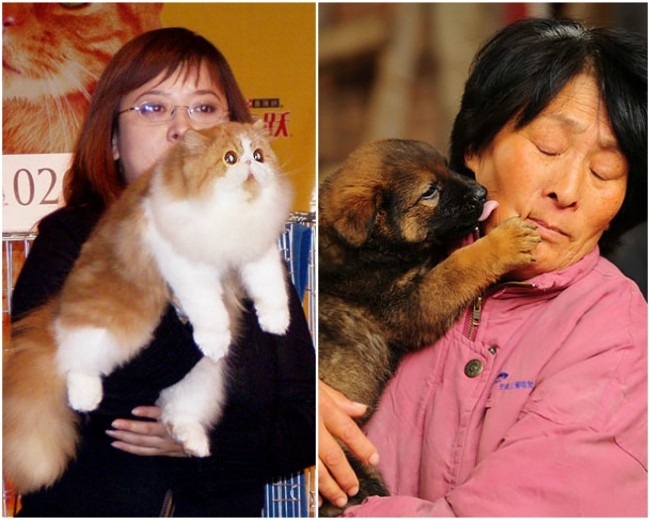 Humanity restored as Taiwan becomes 1st country in Asia to ban consumption of cat and dog meat