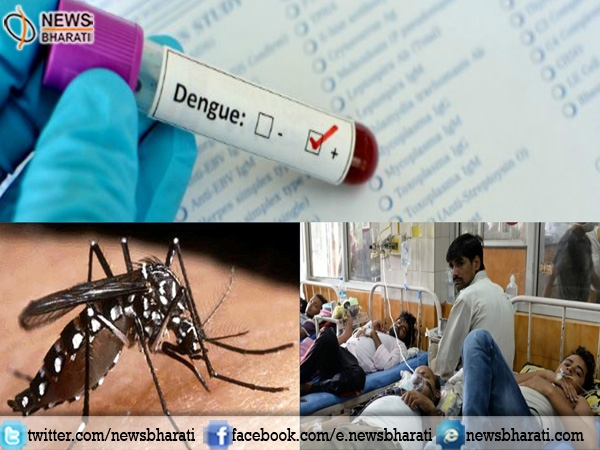 Will Delhi be able to eradicate Dengue cases this year? HC takes strict action against govt bodies