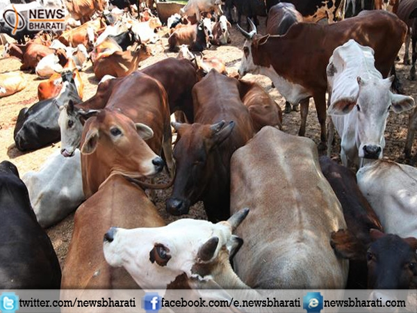 SC refused to hold stay over #cattle sale ban notification