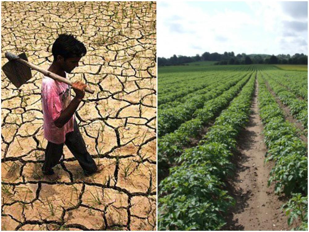 #WorldDaytoCombatDesertification: Nation to achieve Land Degradation Neutrality by 2030