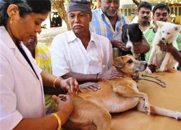 Karnataka's new initiative will monitor activities of veterinary doctors through GPS