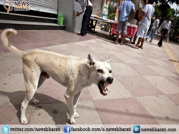 Who let the dogs out! Now Kerala to set up 'Dog Zoos' to combat stray dogs menace