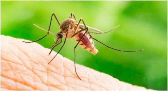 Gujarat issues alert in the wake of rise in Zika Virus cases in Rajasthan