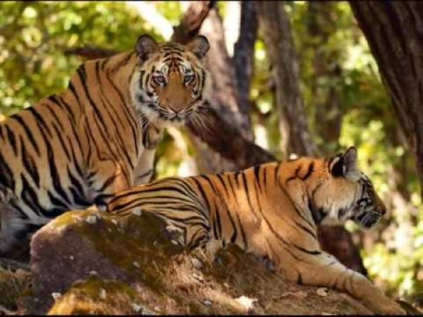 Picture that alleviates worries and raises hopes! Tiger