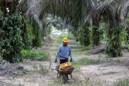 Altering global trade scenario, India curbs on import of palm oil giving major blow to Malaysia's export