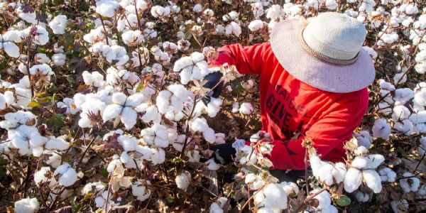 US bans on cotton imports from China citing 'slave labor' in Xinjiang