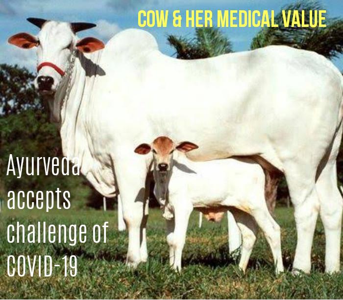 Cow_1H x W: 0