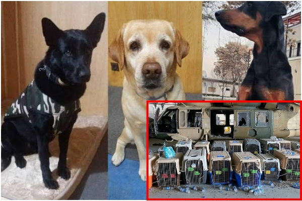 Dogs evacuated from Afgha